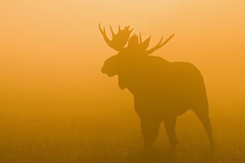 Конкурс для фотографов-натуралистов Looduse Aasta Foto 2011