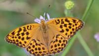 C какими объективами фотографировать бабочек?