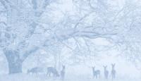 Победители конкурса зимней фотографии Sony 2015