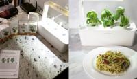 """Теперь в """"умном"""" горшке Click&Grow можно выращивать мяту, петрушку, стевию, тимьян и клубнику"""