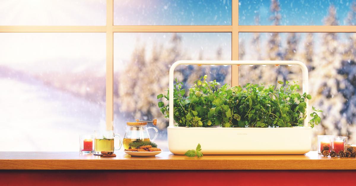 РОЖДЕСТВЕНСКАЯ РАСПРОДАЖА: умные сады и картриджи Click and Grow на 20% дешевле