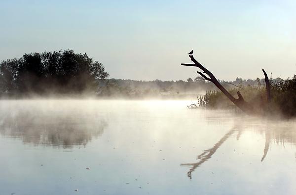 Vesi meelitab loodusfotograafi