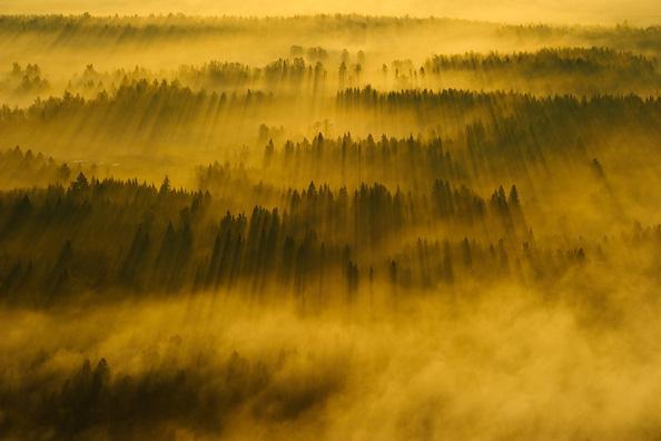 "Looduse Aasta Foto: 2011 Grand Prix Sven Začek ""Kevadkuldne hommik"""
