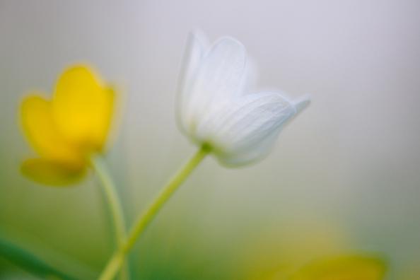 Sveni pildilood – 20. Eksperimentaal-kevad