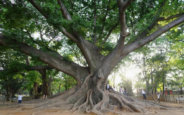 Bangalore Botanical GardenWEB