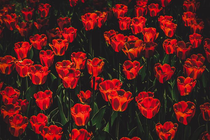 kevad botaanikaaias