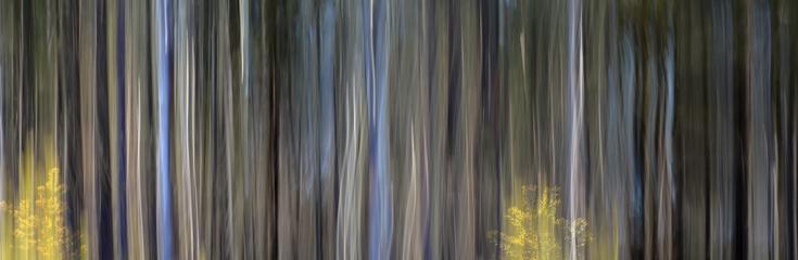 võlumets ... kevadine mets oma värvide ja linnulaulu ja ....
