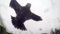 Vaata kuidas kotkas varastab GoPro kaamera
