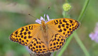 """Uus raamat """"Eesti päevaliblikad"""" aitab leida parima objektiivi liblikate pildistamiseks"""