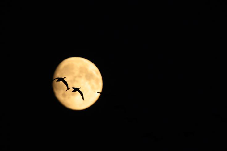 Hanede lend üle kuuketta