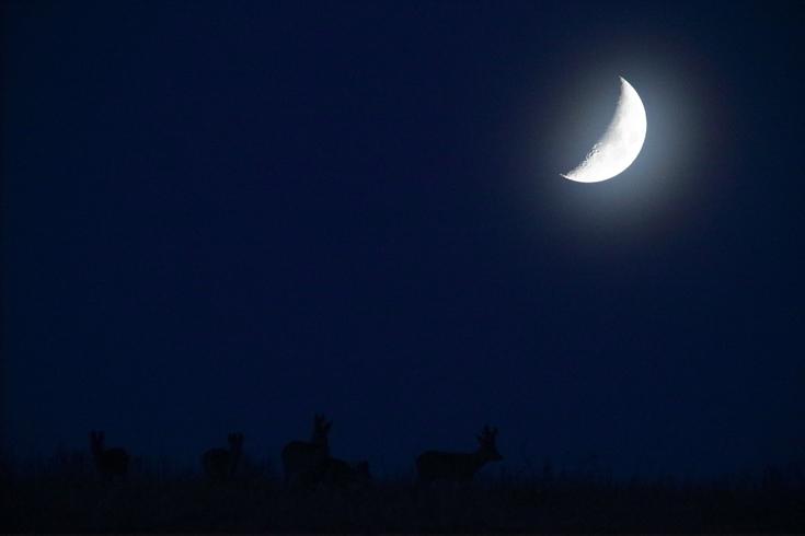 Metskitsed kuuvalgel
