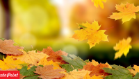 Photopointi e-poes hinnad maas nagu lehed puude all