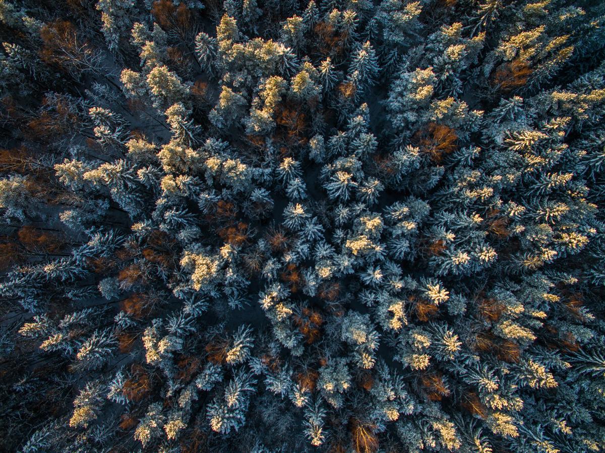 Loojangu värvidesse sulanud talvine mets