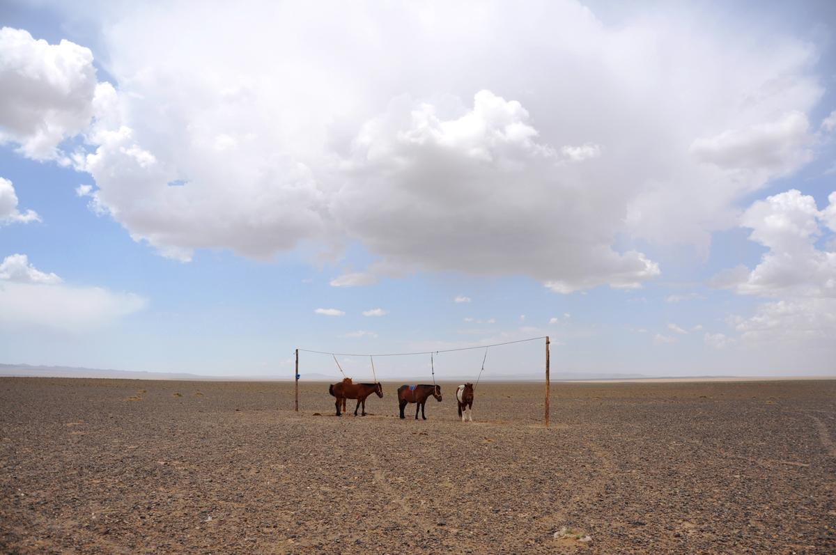 Suveks saledaks. Võistlushobused dieedil, Mongoolia