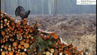 Eesti loodusfotograafid pälvisid tunnustuse mainekal fotokonkursil