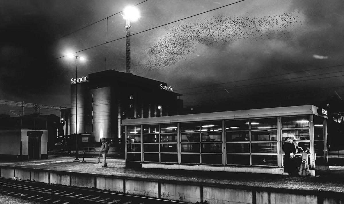 muusik-ja-mustad-linnud