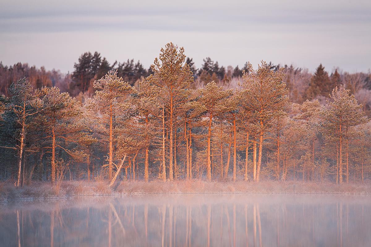 Maastikufotograaf Andrei Reinol: kuidas ma teleobjektiiviga sügist pildistasin
