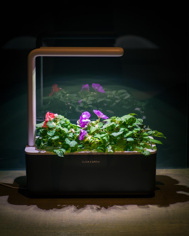 click-and-grow-smart-garden-photopoint-lemmalts-kontor