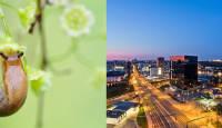Makrofotograafia ja Droonifotograafia e-kursused - sel nädalavahetusel eriti soodsa hinnaga