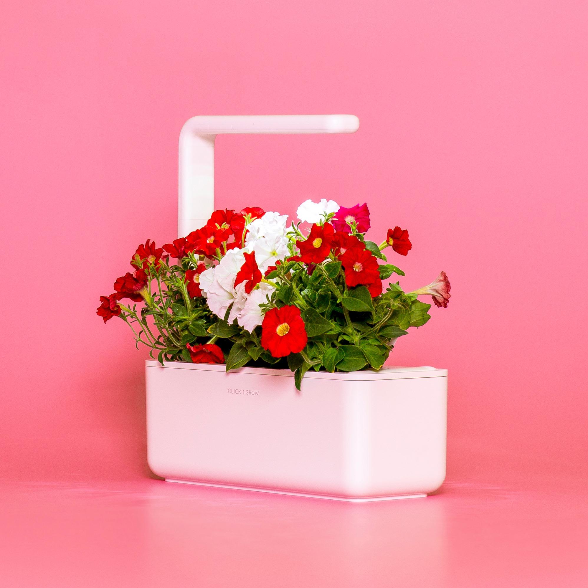 Click & Grow Smart Garden Refill Punane võõrasema