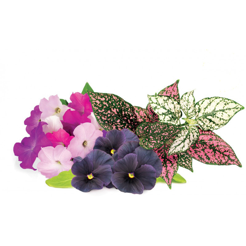 Click and Grow Plant Pod Vibrant Flower Mix
