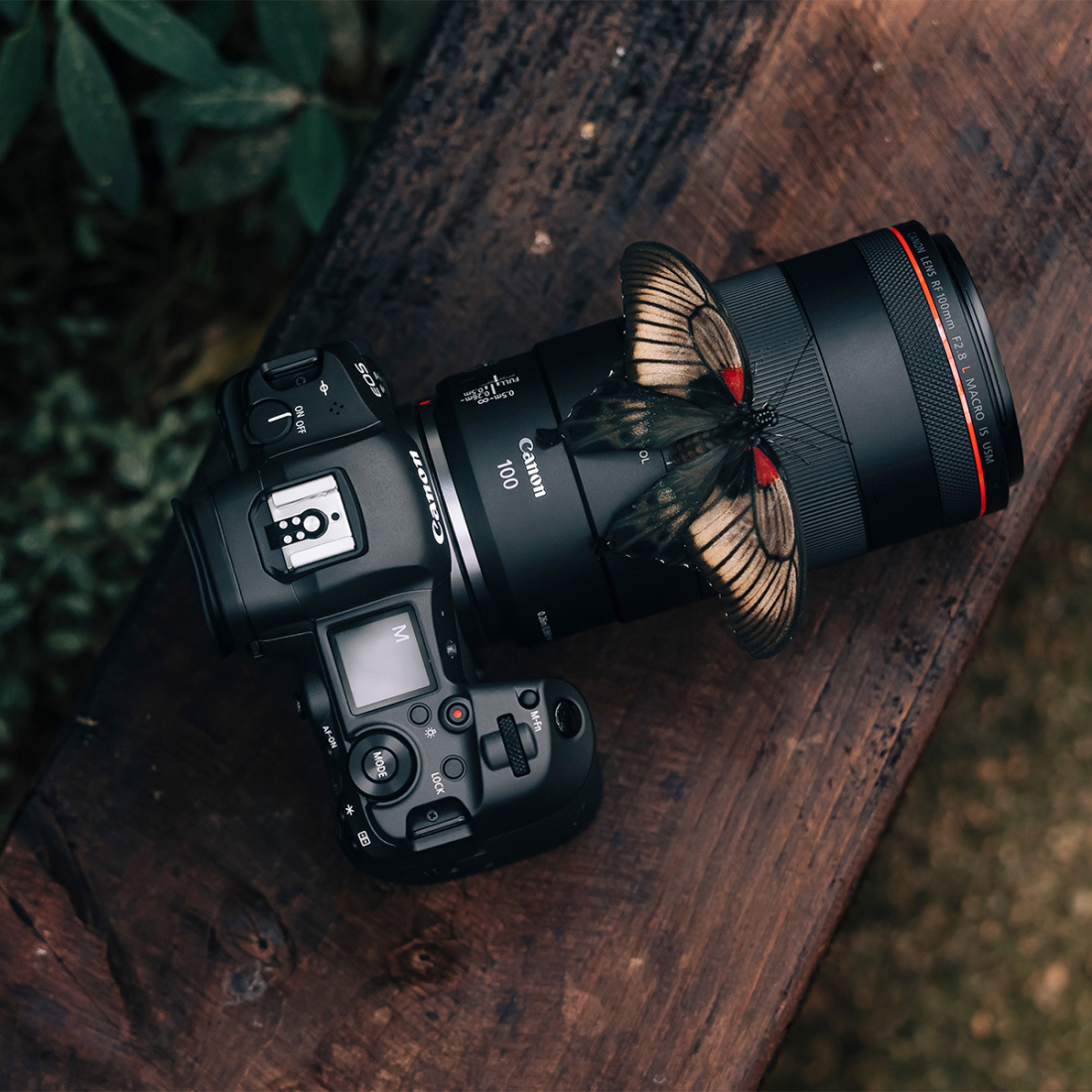 Canon RF 100mm f/2.8 L Macro IS USM